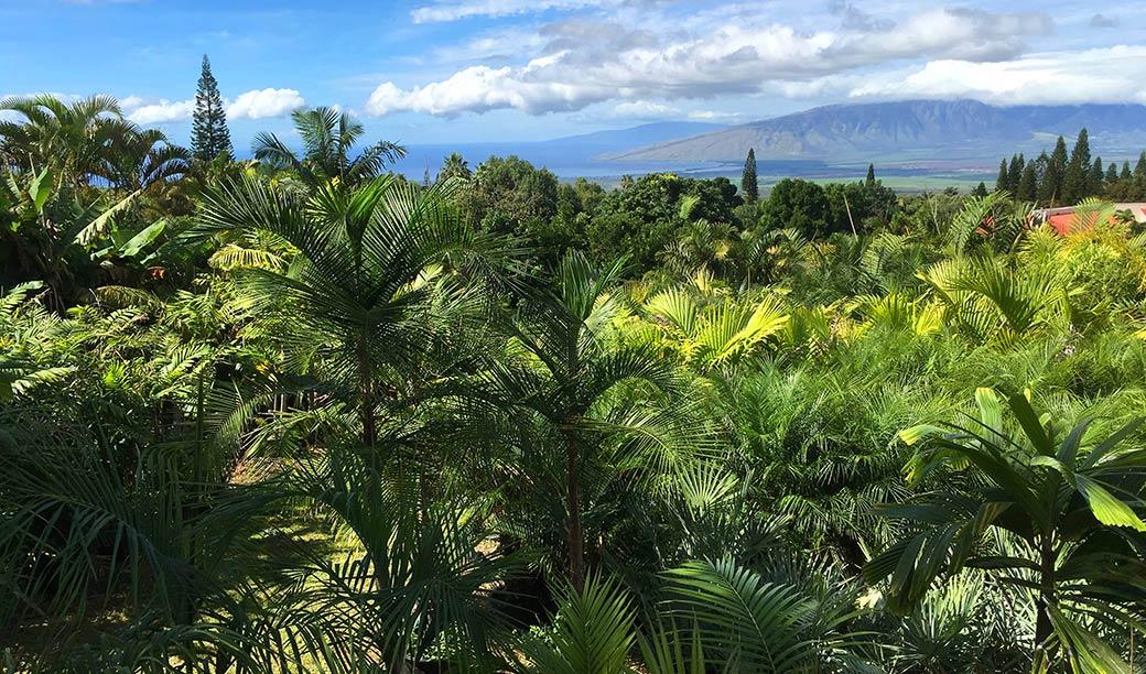 Maui Palm Tree Nursury